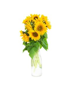 Ray of Hope Sunflower Bouquet