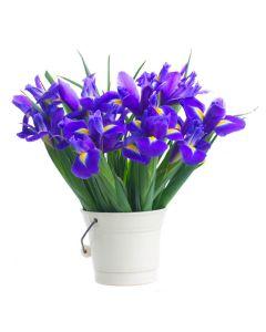 Irises in Paradise Iris Bouquet