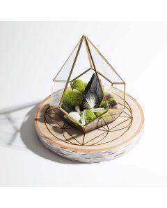 Rustic Crystal Moss Terrarium