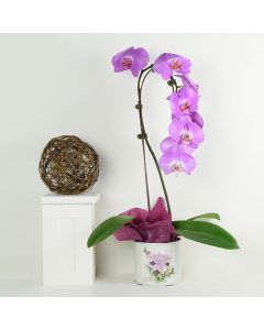 Floral Treasures Exotic Orchid Plant