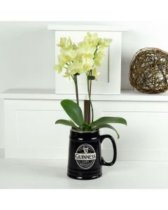 Guinness & Me Exotic Orchid Plant