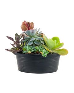 Nature's Own Succulent Garden