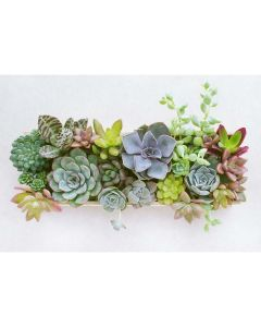 Iridescent Fantasy Succulent Garden