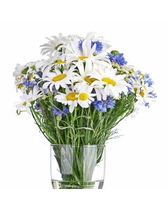 First Whisper of Spring Daisy Bouquet