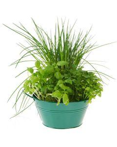 The Basic Herb Garden