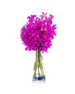 The Premium Pink Exotic Orchids Gift