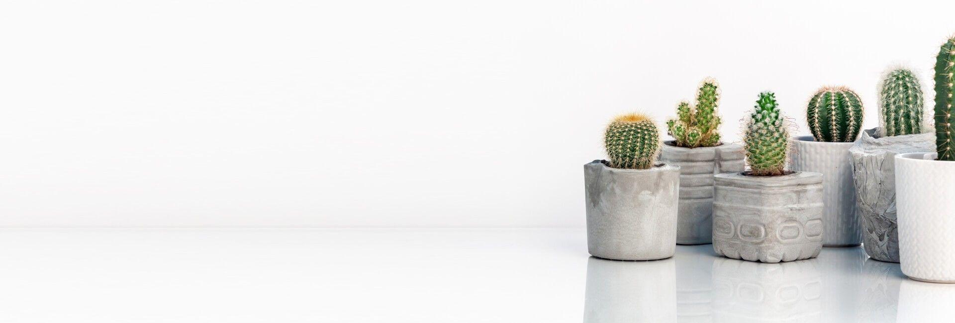 Cactus Flower Gifts Bristol - Best in Bristol, CT