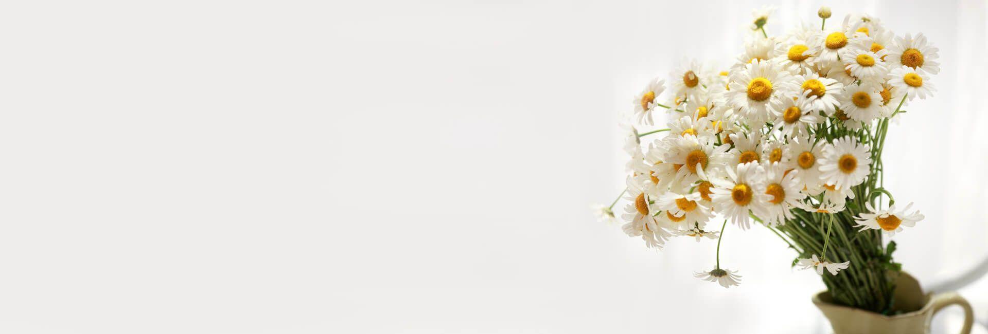 Get Well Soon Flower Gifts Bristol - Best in Bristol, CT