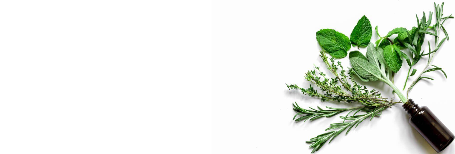 Herbs Flower Gifts Bristol - Best in Bristol, CT