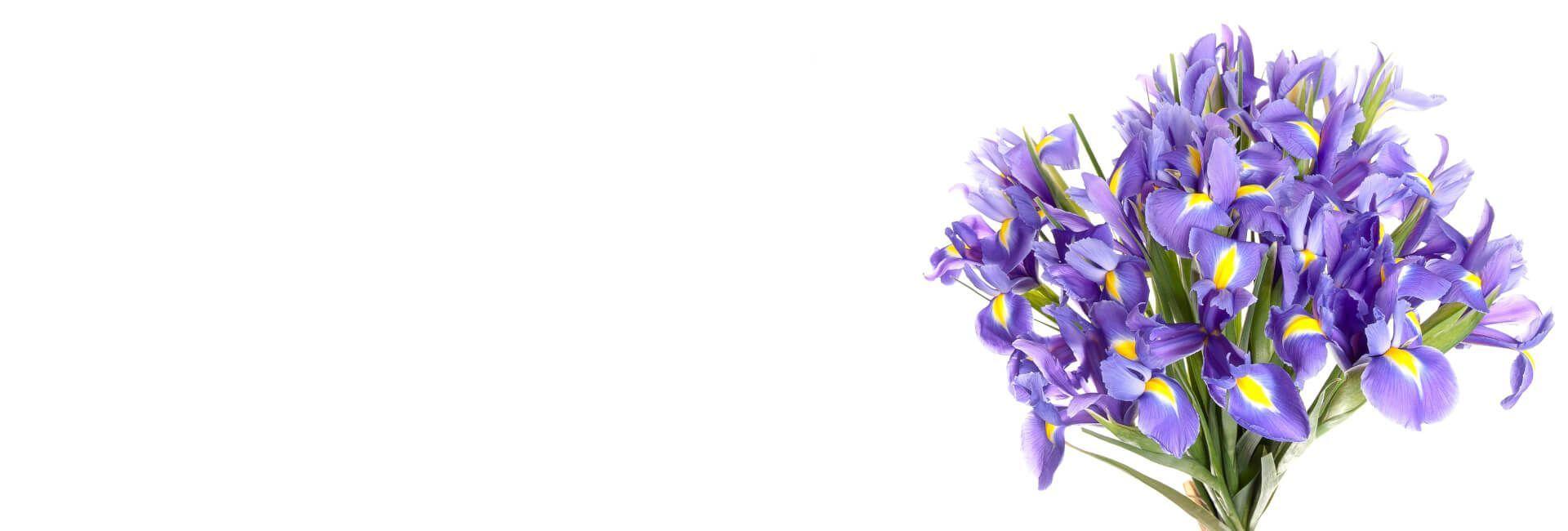 Irises Flower Gifts Bristol - Best in Bristol, CT